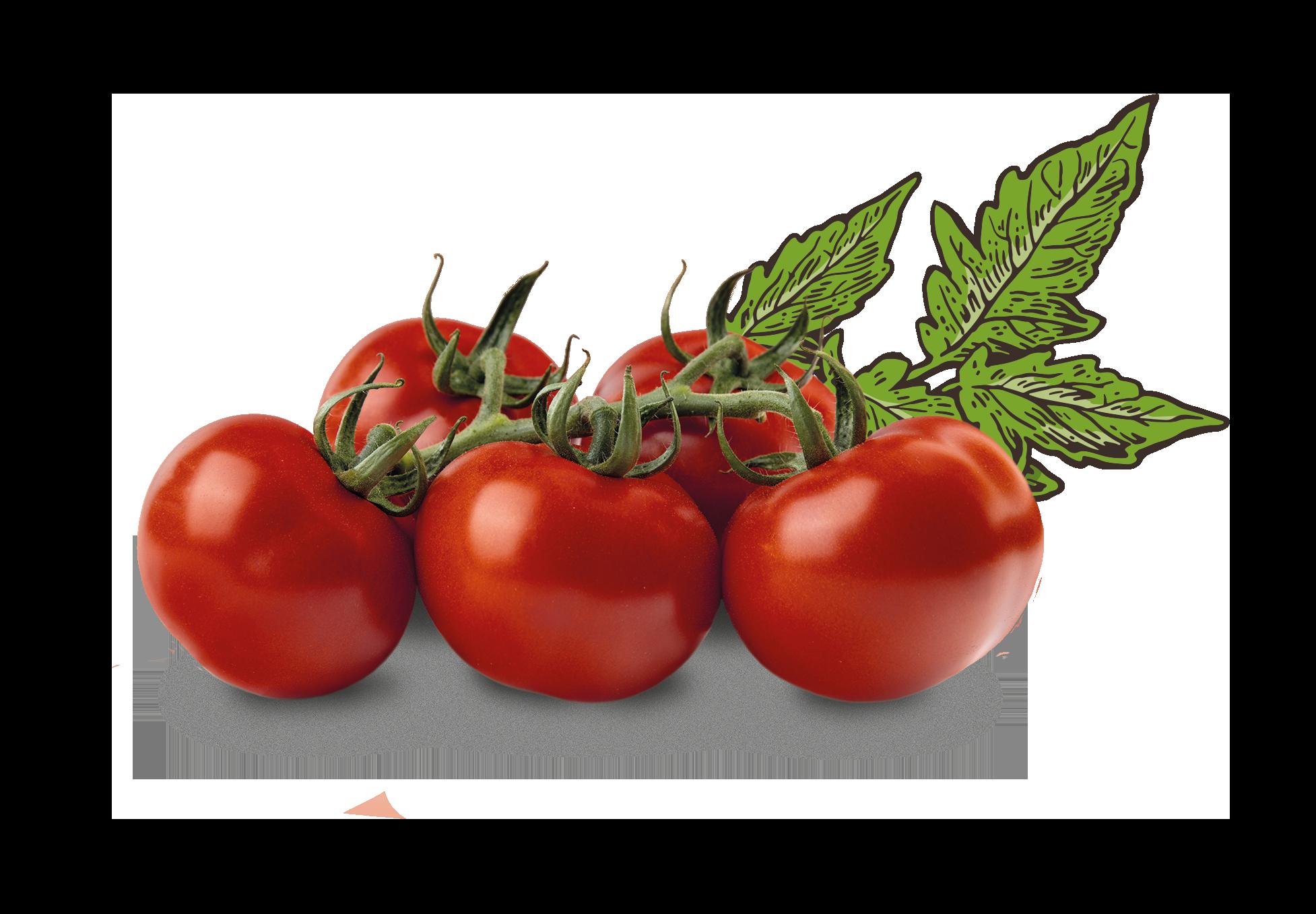 HoH Tomaten